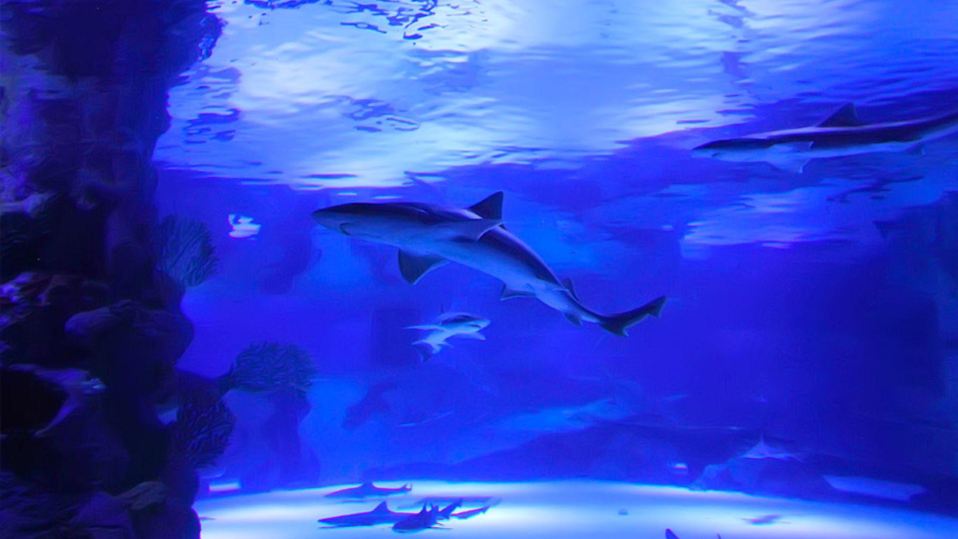 Antalya Aquarium & Face 2 Face Wax Museum